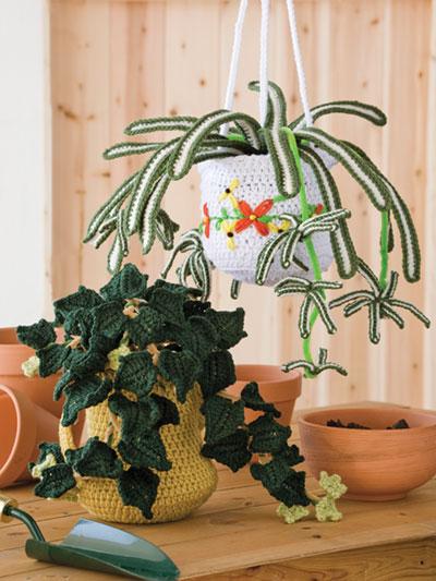 Botanical Beauties/Hanging Gardens
